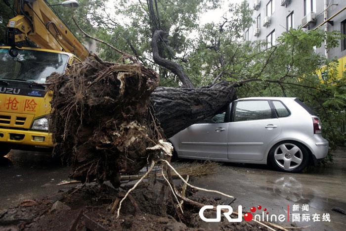 """康明随手掰下一块朽坏的树根,一搓几乎成了粉末,""""还有就是树种这里后"""