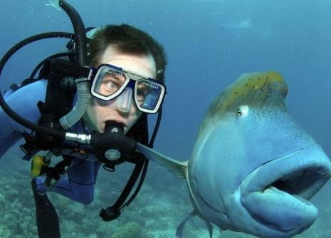 刘德华 汪峰李/澳大利亚大堡礁鱼儿瞪大眼睛吃惊表情萌翻潜水员(组图)