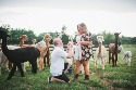 """跟着这位到羊驼群中求婚的痴情男儿,欣赏美丽可爱的""""羊驼""""——转引图片 - 江南一叟 - 江南一叟新闻眼 朋友您好,江南一叟欢迎您"""